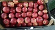 Свежие яблоки из Польши,  JW-INVEST sp.zo.o.